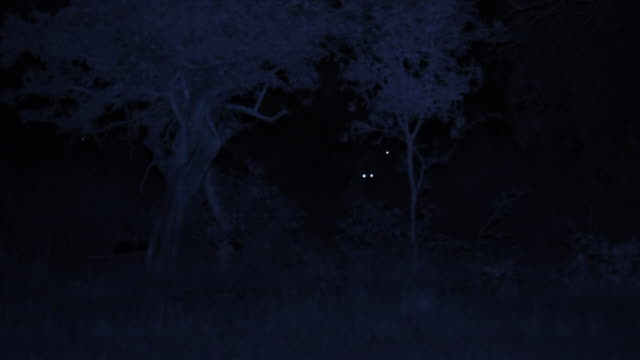 vídeos de stock, filmes e b-roll de ws ts view of several spotted hyena's in distance light reflecting eyes at night / phinda, south africa - olho de animal