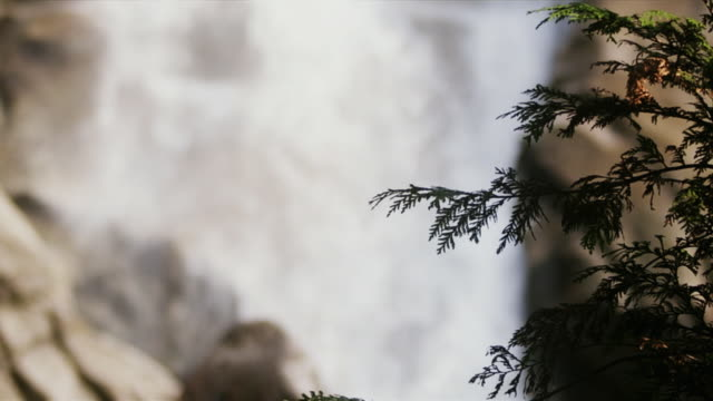 ms r/f slo mo view of shannon falls in forest / squamish, british columbia, canada - squamish stock videos & royalty-free footage