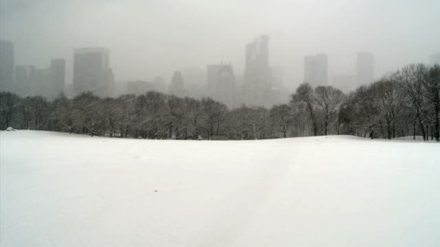 ws view of sheep in meadow of central park during winter / new york city, new york usa - lockdown stock-videos und b-roll-filmmaterial