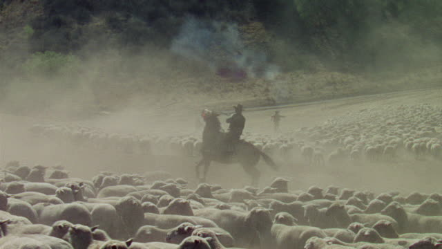 ws ts view of sheepherders on horseback shoot guns into air and field full of sheep - 農林水産関係の職業点の映像素材/bロール