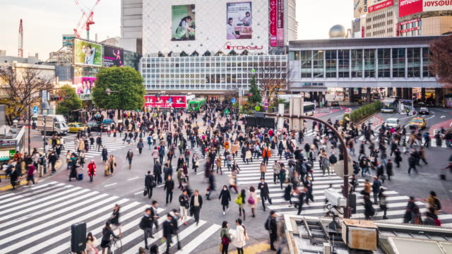 t/l ws ha zo view of shibuya crossing / tokyo, japan - road junction stock videos & royalty-free footage