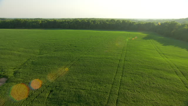 WS AERIAL POV View of Shirley Sough with fields and forest area / Jackson County, Missouri, United States