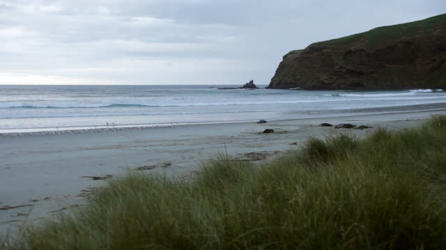 vídeos y material grabado en eventos de stock de ws view of shore with sea lions / catlins, new zealand - grupo mediano de animales