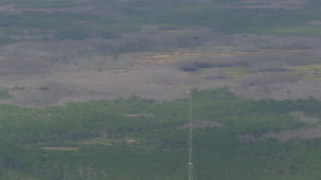 AERIAL WS View of signal and network tower at W Florida forests (Goethe State Forest) / Florida, United States