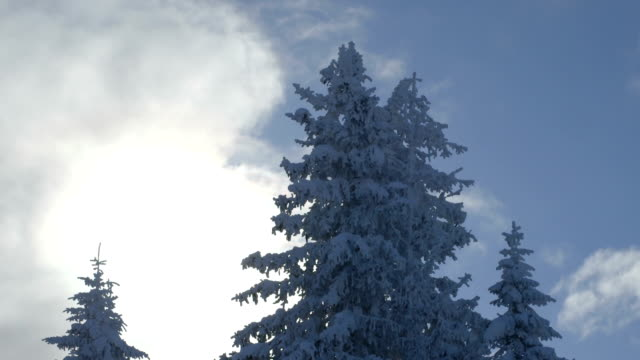 View of sky and snow covered trees during winter