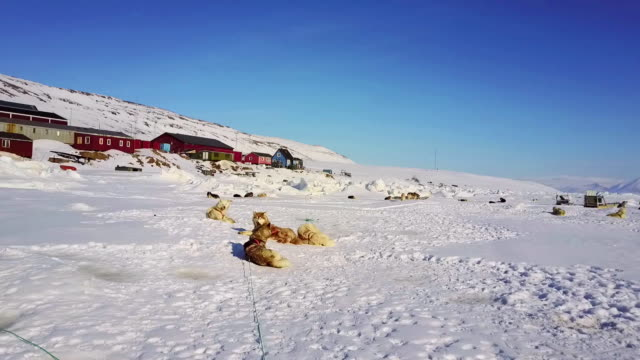 view of sled dogs on snow in greenland - crag stock videos and b-roll footage