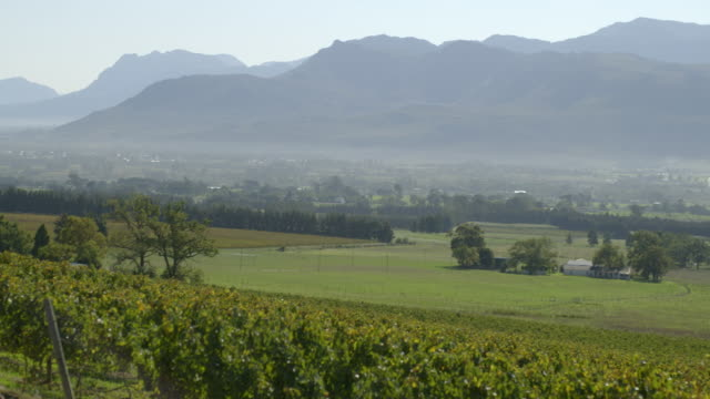 WS PAN View of slightly misty valley with vineyards and mountains in distance at morning / Franschhoek, Western Cape, South Africa