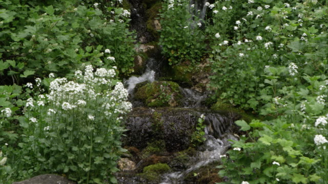 view of small creek flowing through green plants. - american fork city stock videos & royalty-free footage