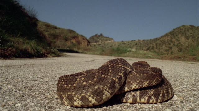 MS View of snake on highway / Los Angeles, California, United States