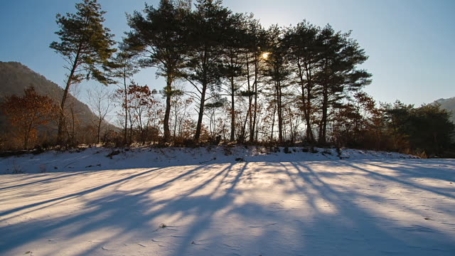 ms t/l view of snow covered field in morning / jeongseongun, gangwondo, south korea    - kälte stock-videos und b-roll-filmmaterial