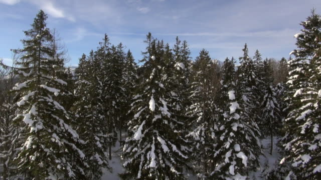 ws aerial tu view of snow covered fir trees and tyrolean mountains in winter / seefeld, tyrol, austria - tyrol state austria stock videos and b-roll footage