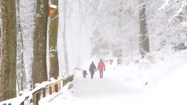 view of snow on the branches and people strolling with a lap dog - lap dog stock videos & royalty-free footage