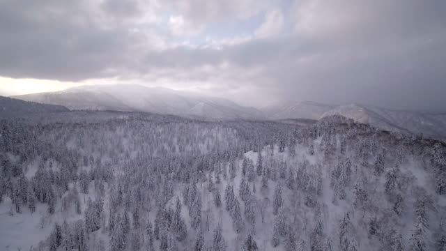 View of snow-covered trees and mountain ranges in Daisetsu national park, Hokkaido, Japan