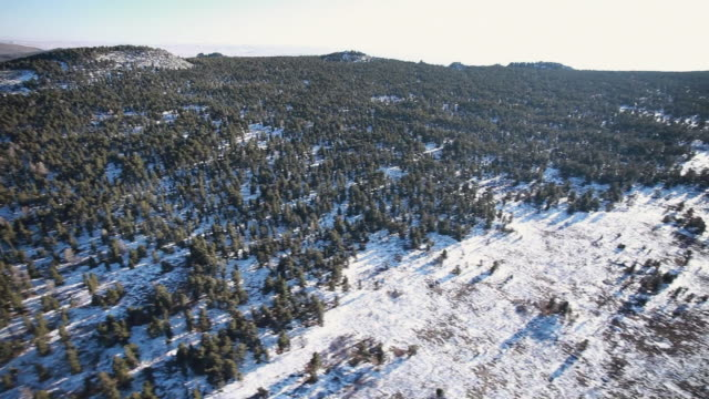 WS AERIAL View of snowy forest / SuhBaatar, Mongolia, Mongolia