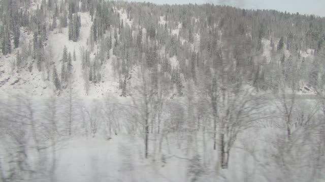 View of snowy forest