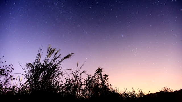 View of Star Field, milky way and Reed in Suncheonman Bay(Natural Landmark,Ecological Park) at Sunset to Night