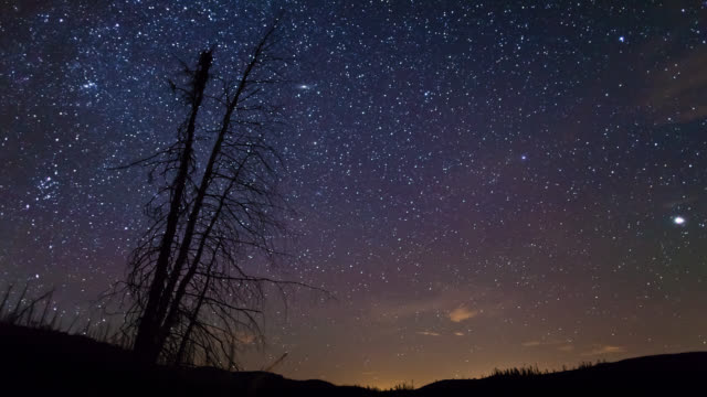ms t/l view of starry night before  storm passing on grands-jardins national park / quebec , canada - haltbarkeit stock-videos und b-roll-filmmaterial