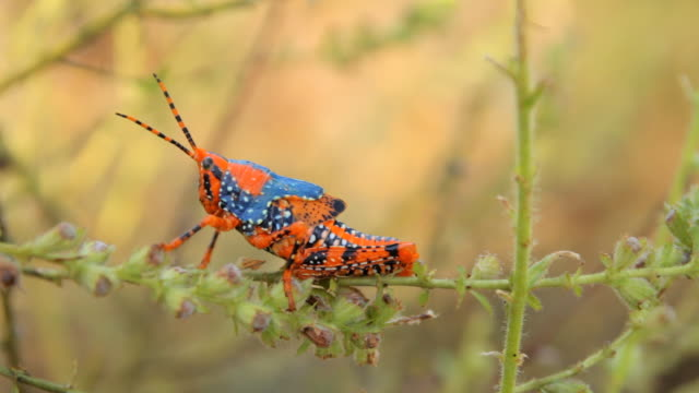 cu view of static colorful insect / northern territory, australia - insect stock videos & royalty-free footage