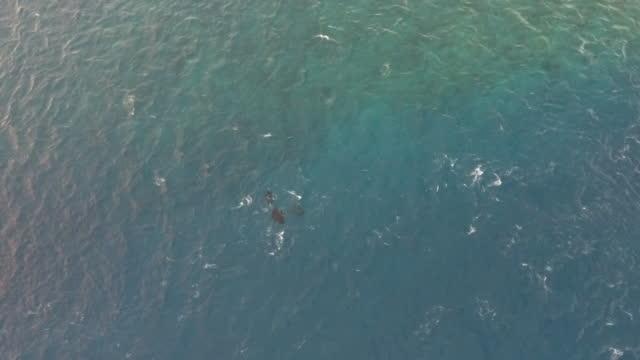vídeos de stock, filmes e b-roll de vista aérea do arraias fervilhando na lagoa - territórios ultramarinos franceses