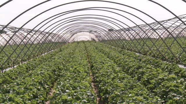 MS TU View of strawberry field / Huelva, Andalusia, Spain