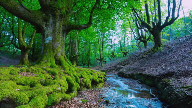 WS T/L View of stream flowing from Natural Park / Gorbeia, Bizkaia, Basque Country, Spain