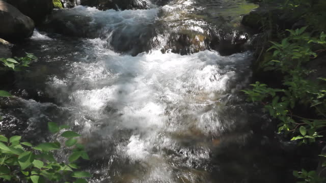 vidéos et rushes de ms view of stream water flowing over rocks in river / sundance, provo river, utah, usa - provo
