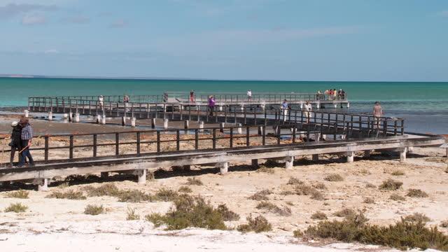 ws view of stromatolites at hamelin pool with people in background / shark bay, western australia, australia - 溜水点の映像素材/bロール