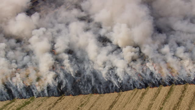 ws aerial zi zo view of stubble burning / mon, denmark - europe stock videos & royalty-free footage