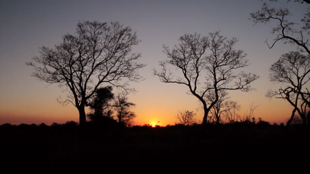 ws view of sun sets between two silhouetted trees with large sun lens flare / ghanzi district, ghanzi district, botswana - wiese stock videos & royalty-free footage