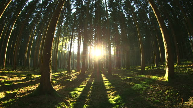 WS View of sunbeams in forest and shining sun / Serrig, Rhineland Palatinate, Germany