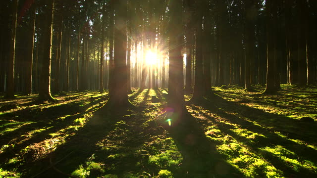ws view of sunbeams in forest with shining sun / serrig, rhineland palatinate, germany - zona arborea video stock e b–roll