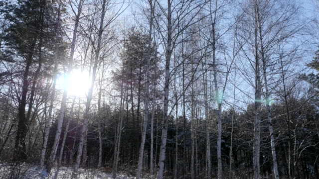 View of sunlight and snow-covered Inge Wondae-ri white birch forest