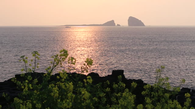 WS View of Sunrise and Oilseed Rape flower at bank of ocean at Hyeongjeseom Island / Jeju-do, South Korea