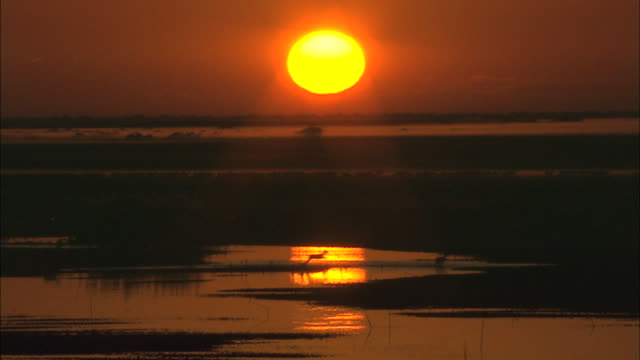 view of sunrise over bangweulu marsh full of black lechwes and fog, zambia, africa - zambia stock videos & royalty-free footage