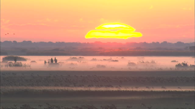view of sunrise over bangweulu marsh full of black lechwes and fog, zambia, africa - afrika stock-videos und b-roll-filmmaterial