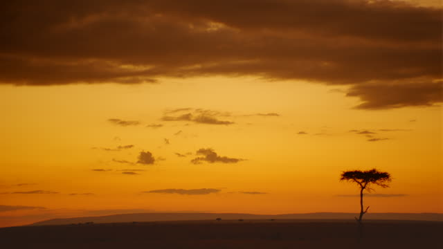 WS View of sunset over grassland with small trees and bushes / Masai Mara, Kenya