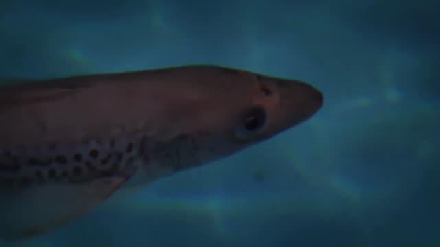View of swimming fish under the water of Aquarium