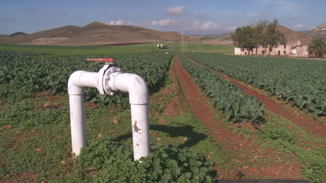 MS View of Swiss Chard growing in field in front of Control Valve of irrigation at Cabo de Gata Natural Park / Nijar, Andalusia, Spain