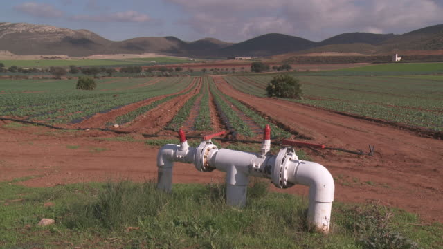 WS View of Swiss Chard growing in field with Control Valve of irrigation at Cabo de Gata Natural Park / Nijar, Andalusia, Spain