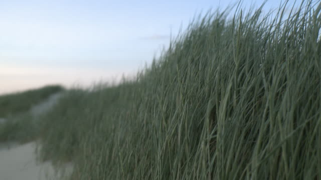 MS View of tall grass field / St. Peter-Ording, Schleswig Holstein, Germany