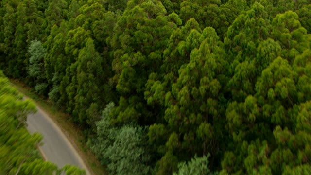 ms aerial zi view of tall trees and cutted trees in wooded area / tasmania, australia - tall high stock videos & royalty-free footage