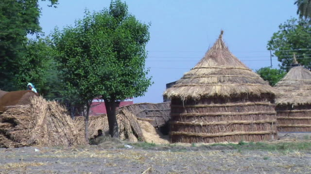 zo ws view of thatched hut in village / haryana, india - haryana stock videos & royalty-free footage
