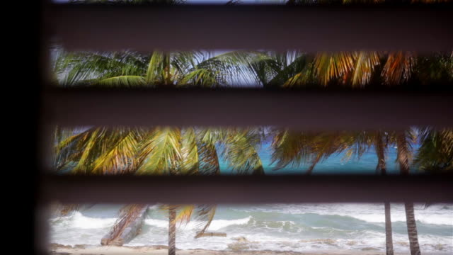 a view of the beach and plans trough the hotel room window - cuba stock videos & royalty-free footage