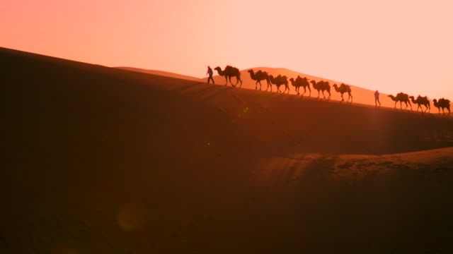 view of the camels walking on the desert at sunset - camel train stock videos & royalty-free footage