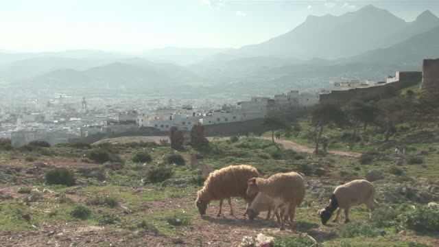 vidéos et rushes de ws zi view of the city with sheeps grazing in foreground - maroc