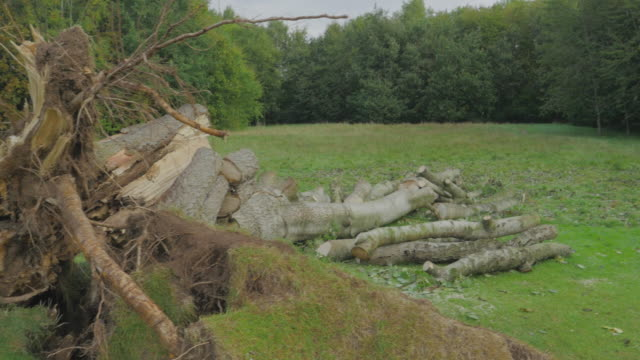 view of the destroyed tree by wind,northern ireland countryside - landscaped stock videos & royalty-free footage