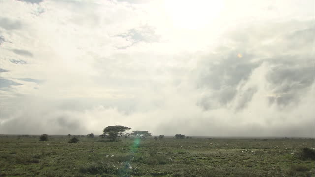 view of the field in the fog, serengeti national park, tanzania - nebel stock-videos und b-roll-filmmaterial