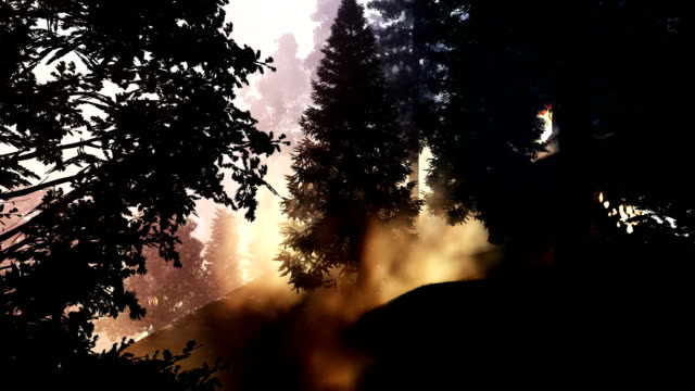 view of the forest fire - taiga stock videos and b-roll footage