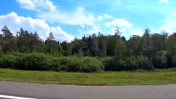 View of the forest from the window of a fast moving car on the road