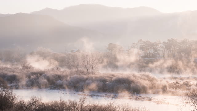 view of the frost on the tree with foggy near soyang river in the morning, chuncheon, gangwon province at winter - frozen stock videos & royalty-free footage